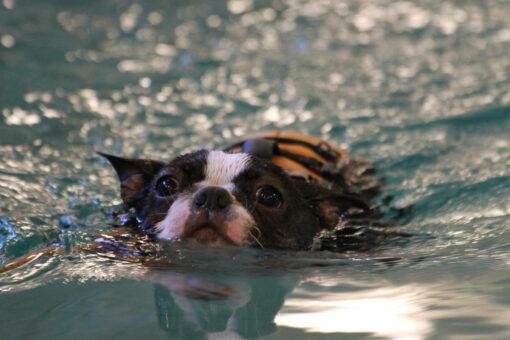 Ruska uimassa Hyvinkäällä 2.6.2013
